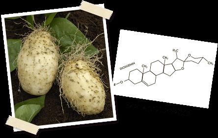 ヤムイモとジオスゲニンの構造式